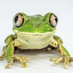 FroggyPete-FroggyPack icon