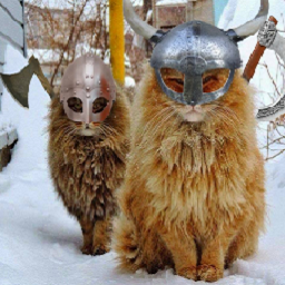 fluffycats-fluffycats_update icon